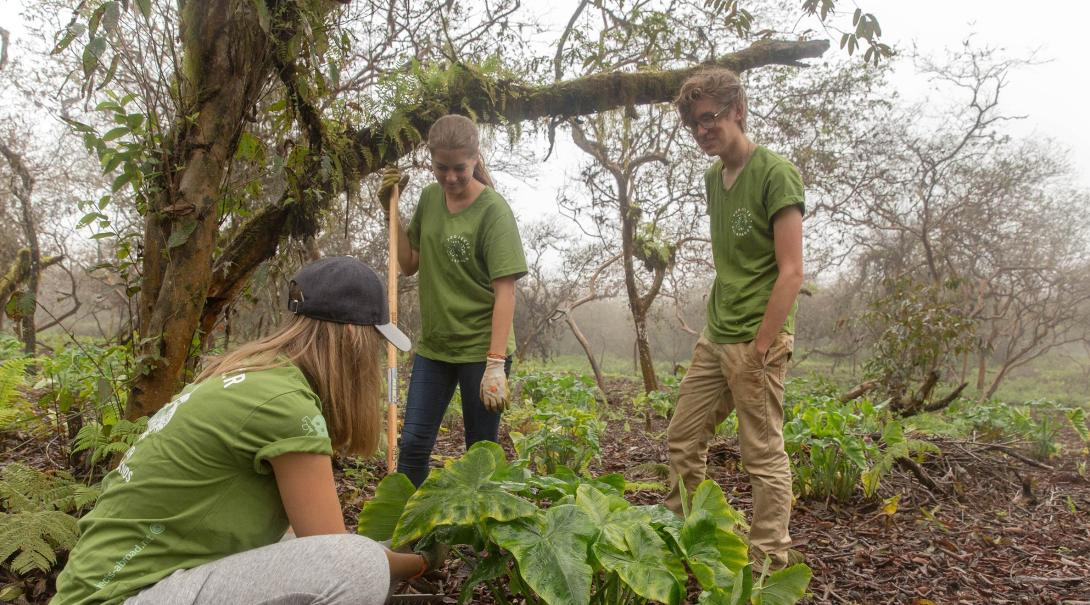 Projects Abroad volunteers remove invasive plant species as part of their volunteer work in Ecuador.